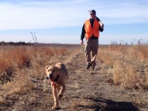 Best GPS tracker for Dogs