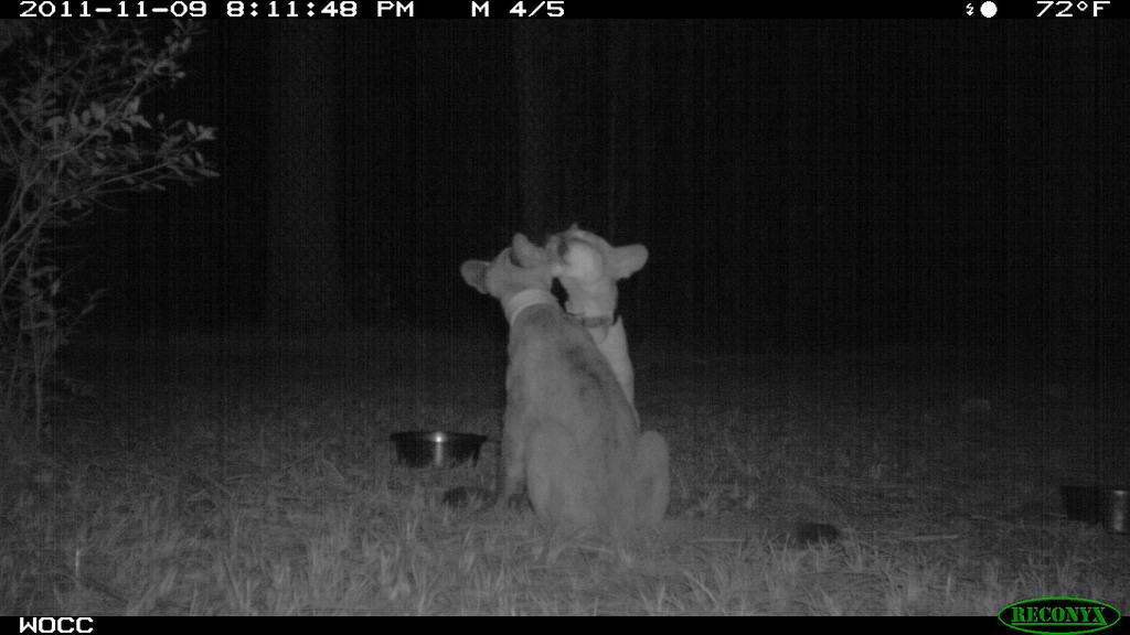 Trail Camera that sends pictures to a cell phone