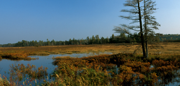 Wetland Permitting Sections 401 and 404